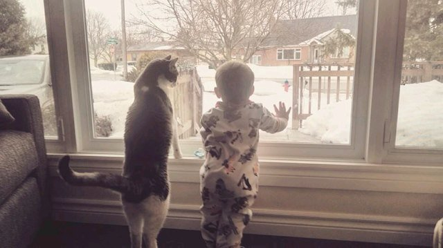Cat and baby looking out window at snow.
