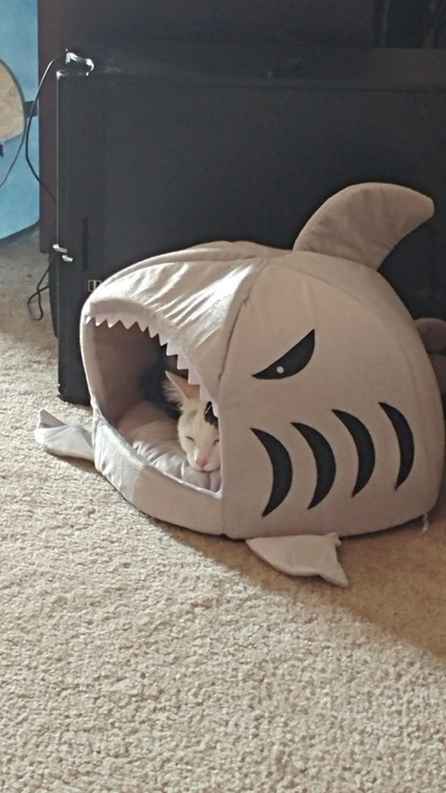 Cat sleeping in a bed shaped like a shark.