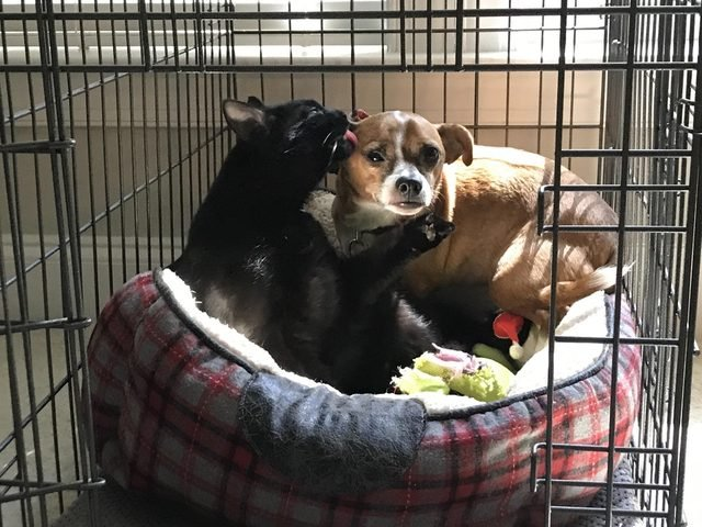 Dog and cat sharing a bed in a kennel.