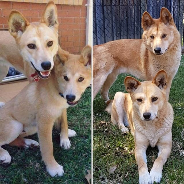 Side by side photos of dogs as a puppies and dogs as an adults.