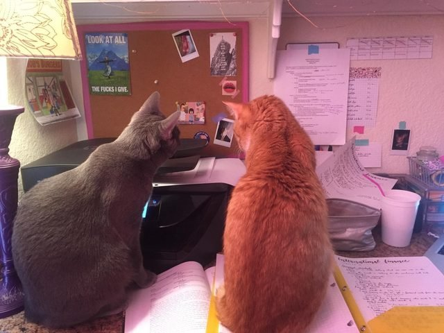 Two cats looking at printer.