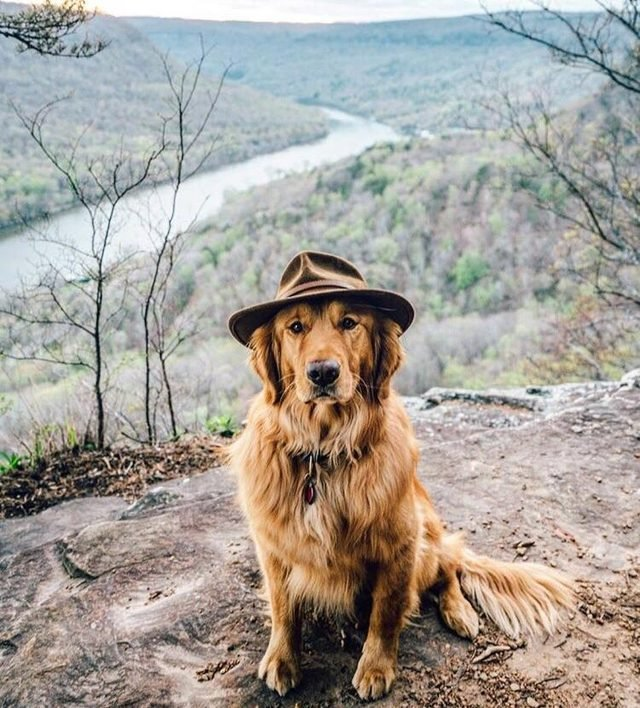 Dog wearing a hat in the woods
