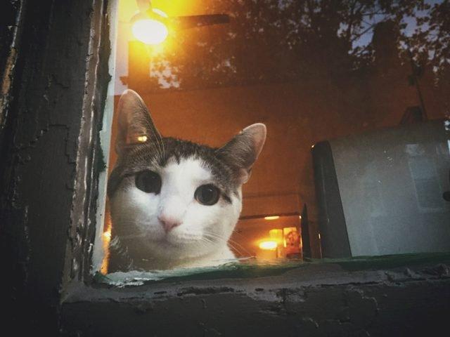 Cat in a window.