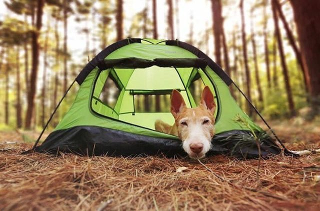 23 dogs living their best life as camping rock stars