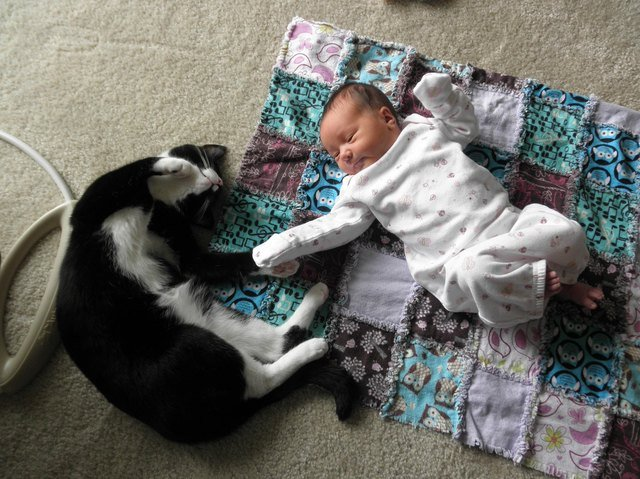 Cat and baby sleeping next to each other.