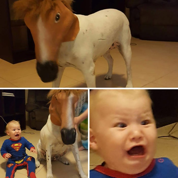 My Cousin Placed A Horse Mask On His Dog, His Son Didn