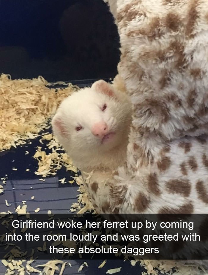 Funny animal snapchats