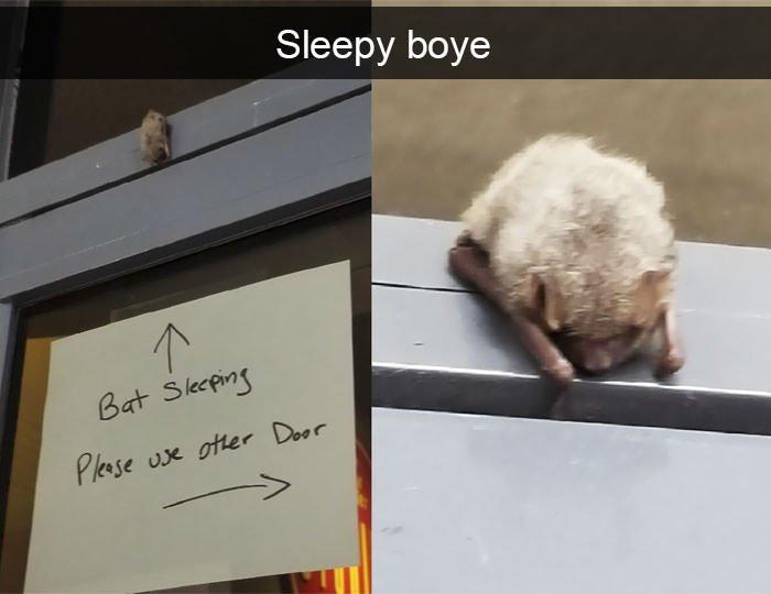 Funny animal snapchats