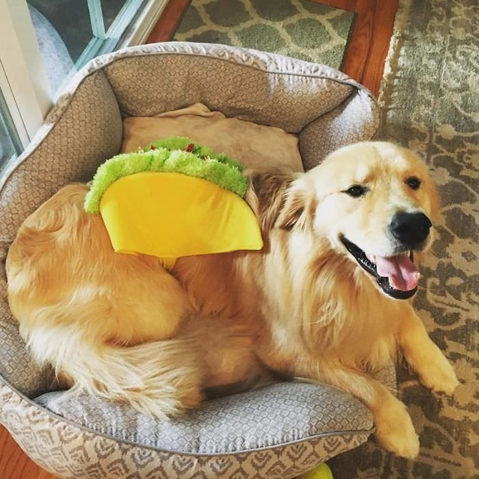Costume For Large Dogs