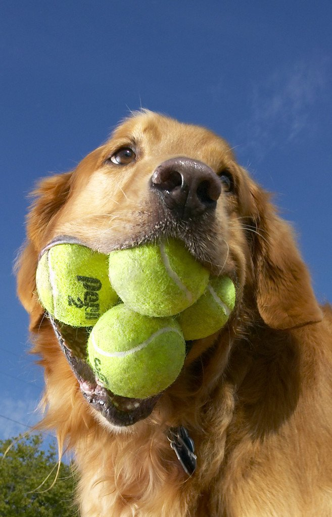 Most Tennis Balls