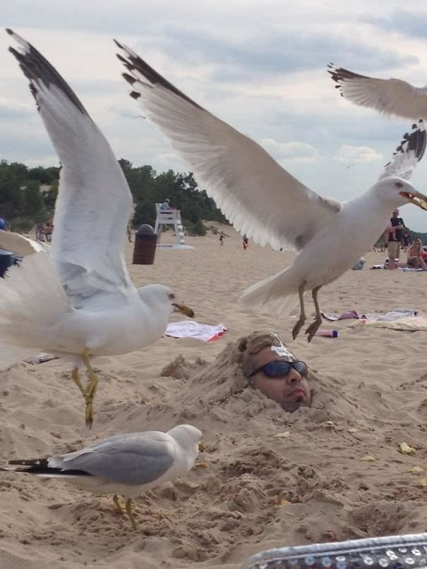 Buried A Friend In The Sand And Throw Potato Chips Around His Head - Then Came The Seagulls