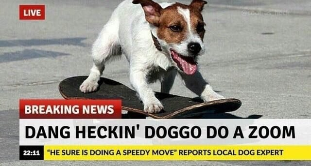Dog on a skateboard.