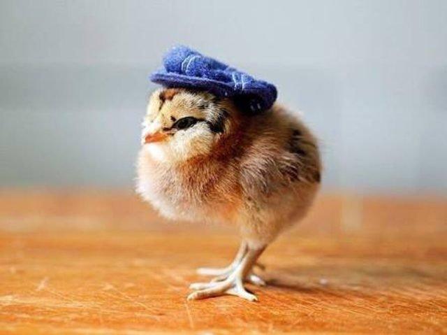 Chick wearing denim newsboy hat.