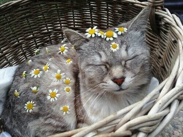 Cat decorated with daisies.