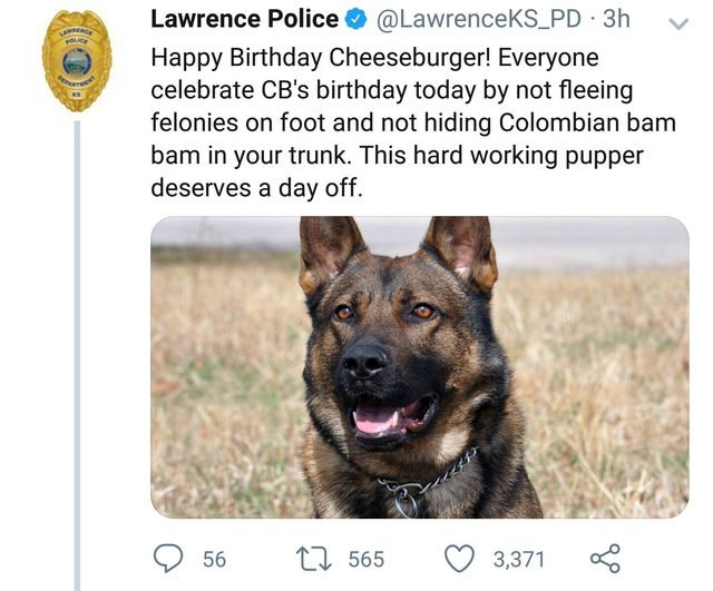 Tweet about police dog