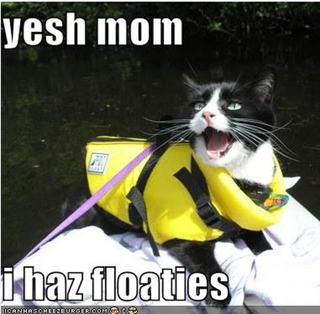 Cat wearing life vest