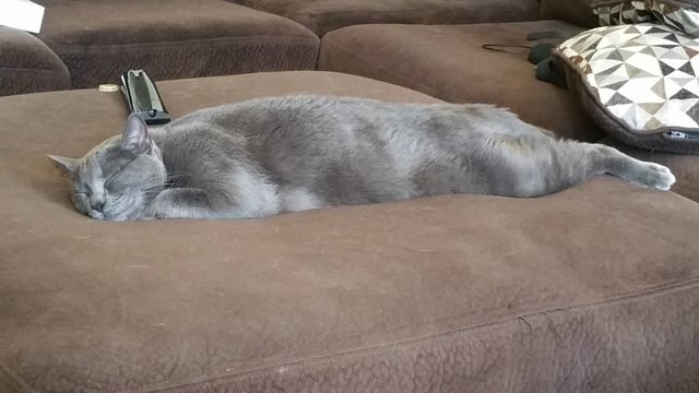 Cat sleeping stretched out.
