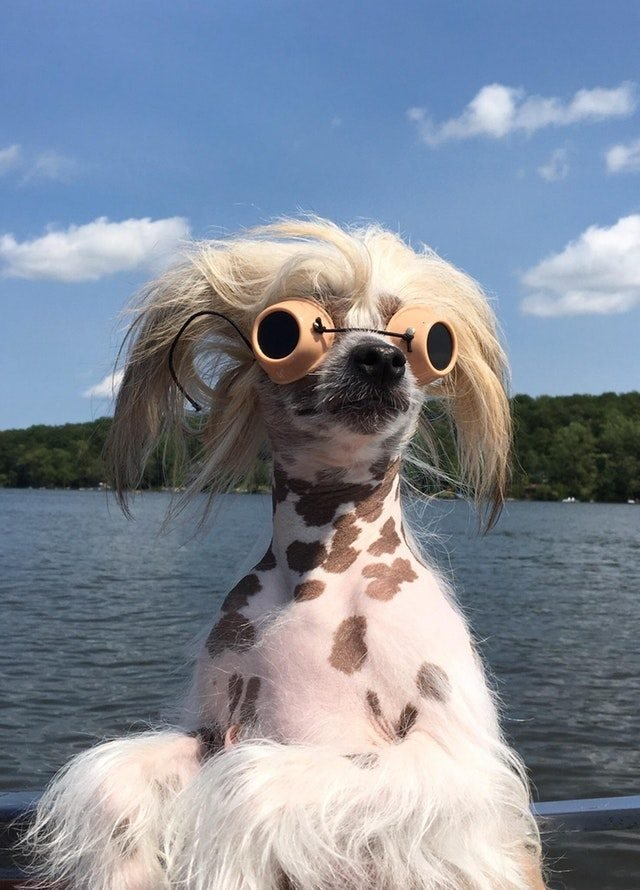 dog with goggles