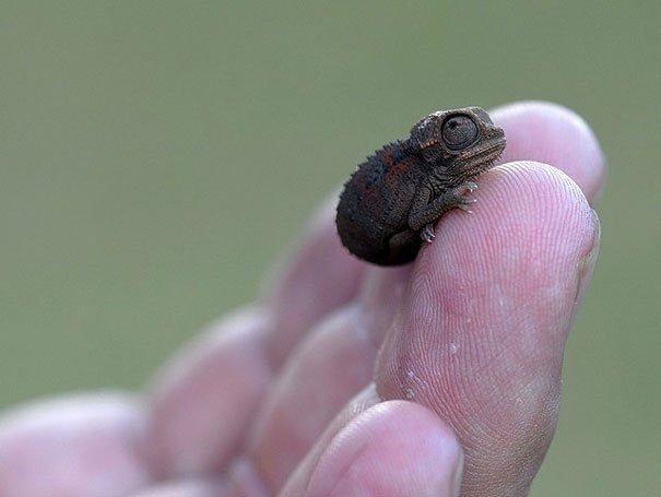 tiny creature
