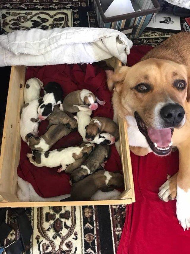 happy mama dog