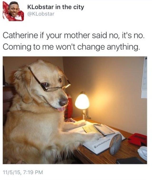 Dog in glasses.