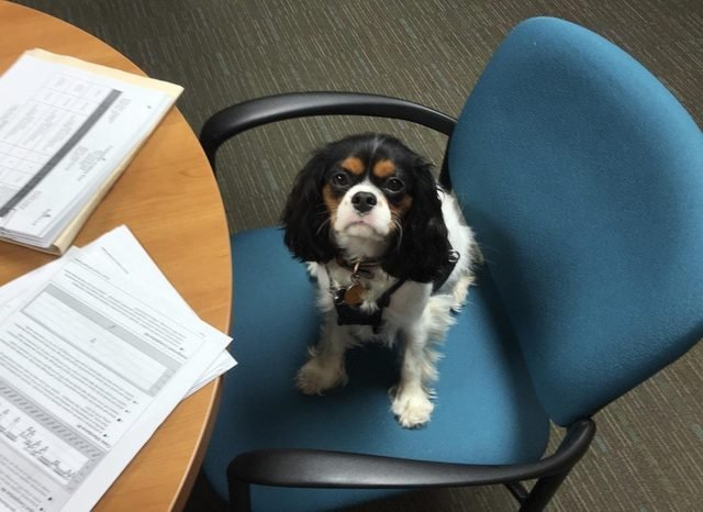 Dog sitting in chair with papers on table.