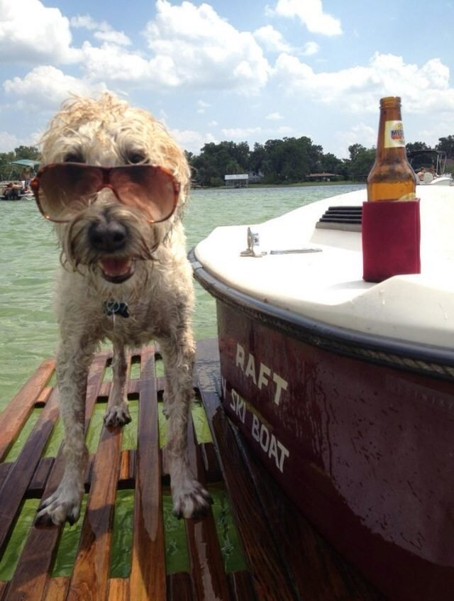 Dog standing on a dock by a lake next to a beer.