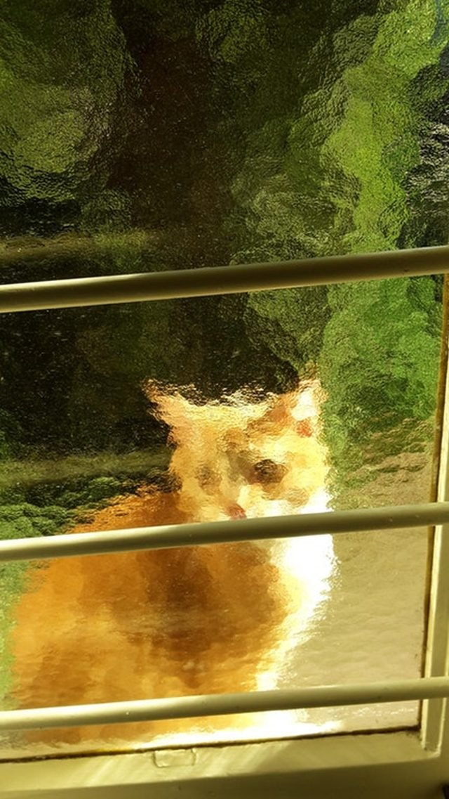 Cat through textured glass window.