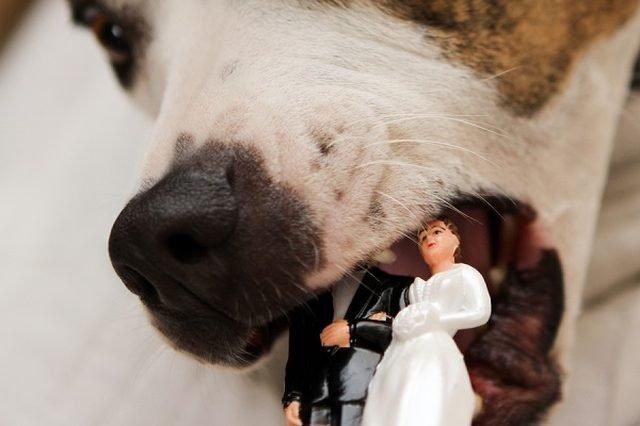 Dog eating wedding topper