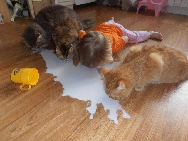 Three cats and a toddler licking milk of the floor.