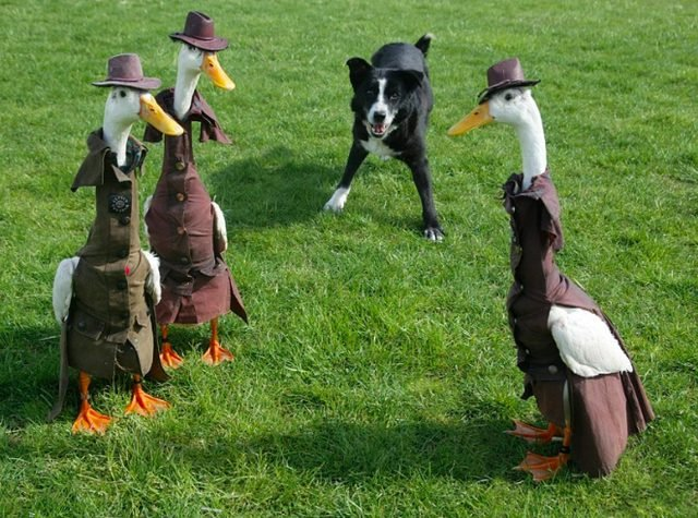 Three ducks in suits and fedoras.