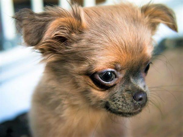「愛犬 鼻を叩く」の画像検索結果