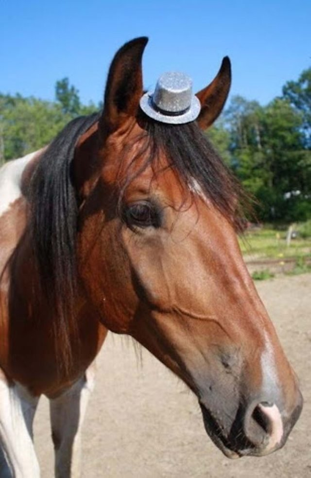Horse wearing miniature silver top hat.