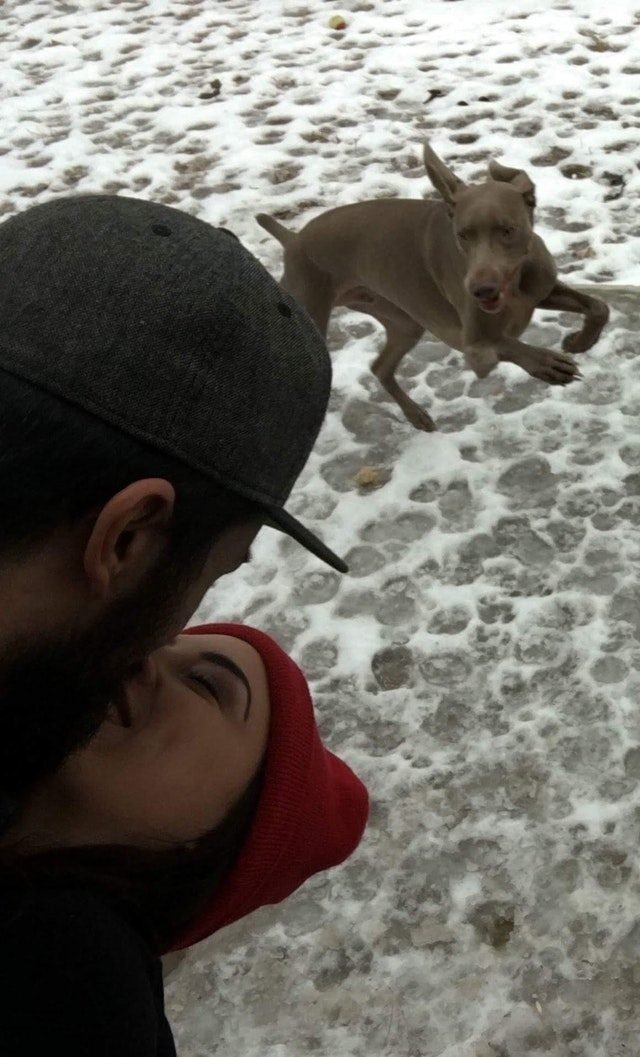 Dog photobombing picture of kissing couple.
