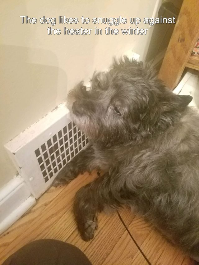 Dog sleeping against heater.