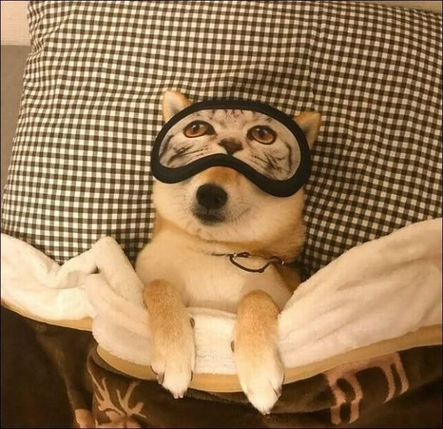 Dog taking a nap with a cat sleep mask on