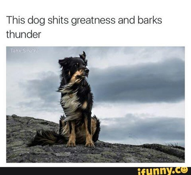 Dog on mountain with wind blowing