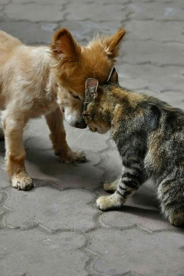 Dog and cat bumping heads.
