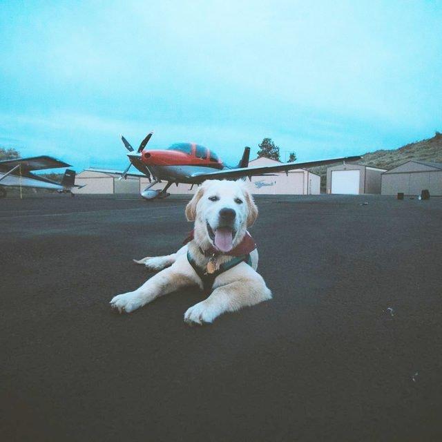Dog in vest on tarmac.