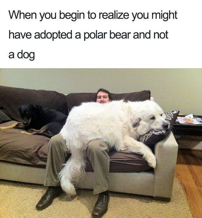 dog-28