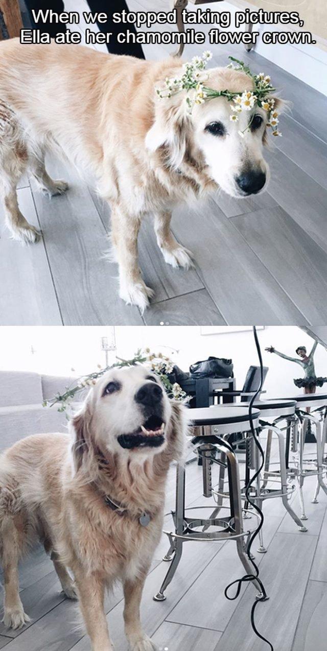 Dog wearing a flower crown.