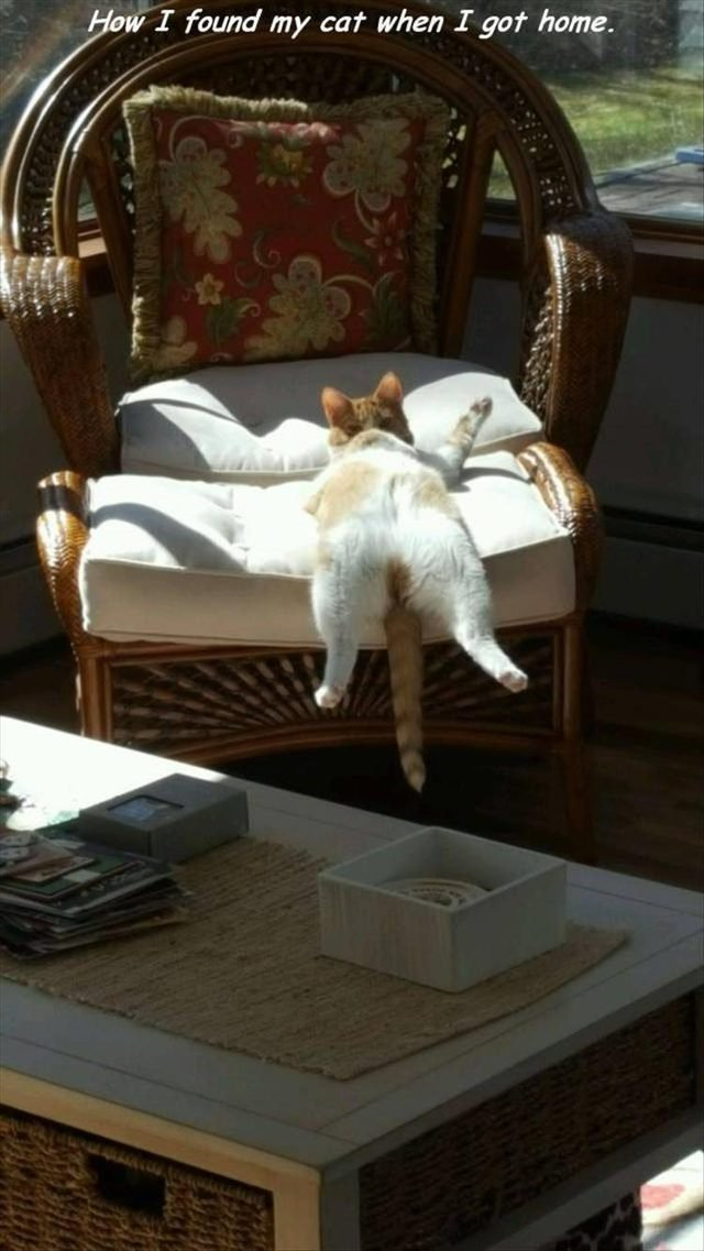 Cat is very comfy on chair