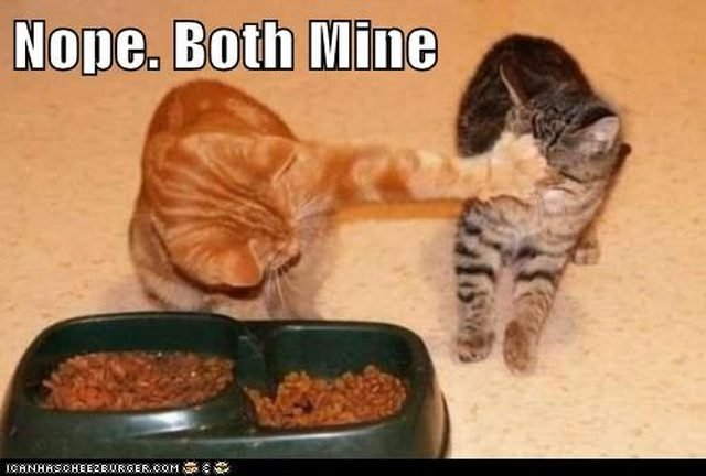 Kitten not sharing food