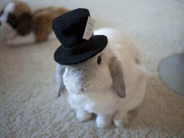 Rabbit wearing top hat.
