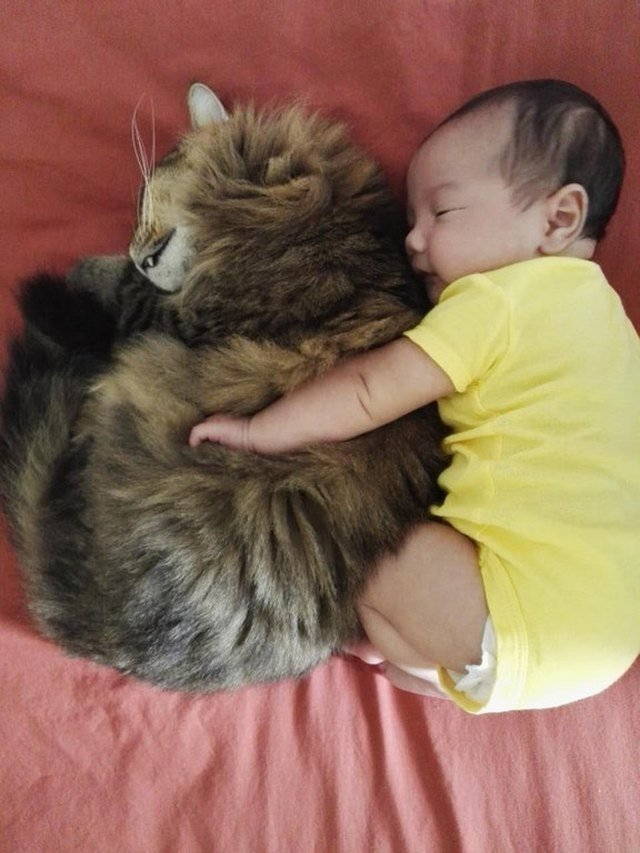Cat and baby cuddling.