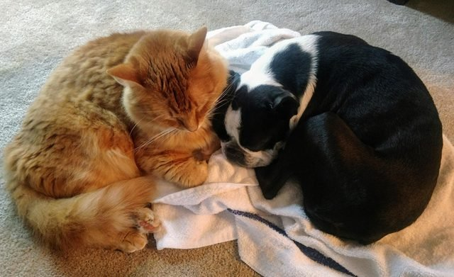 Dog and cat curled up together.
