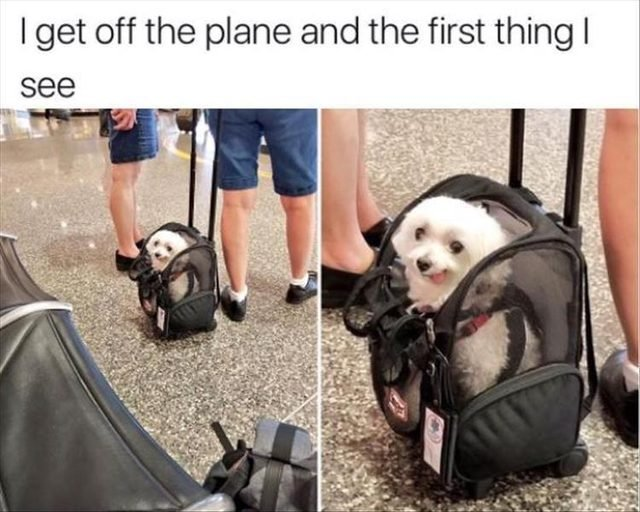 Cute dog in a dog carrier
