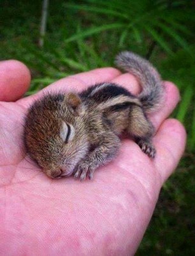 Tiny, Tiny Baby Animals That Will Melt You