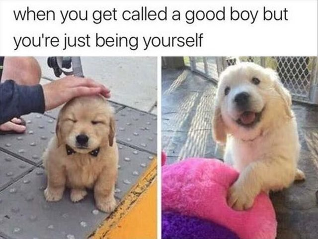 Cute puppy meme about being called a good boy, but just being yourself
