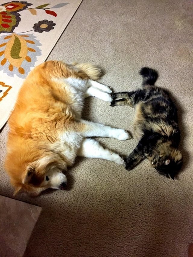 Dog and cat touching paws.